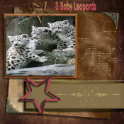 3_Baby_Leopards.png